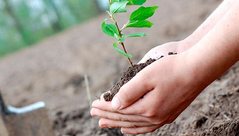 6 мая в Заволжье пройдет экологическая акция по посадке деревьев
